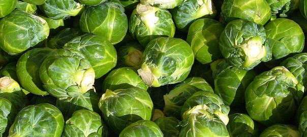 can gerbils eat brussel sprouts
